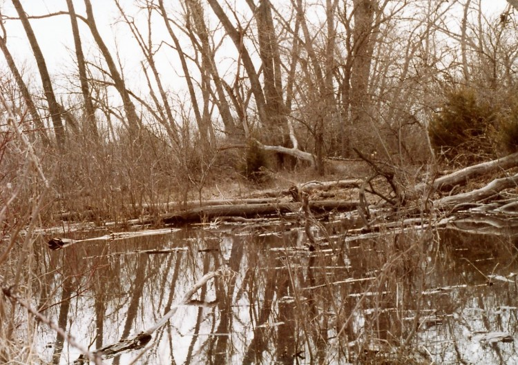Clearwater Creek 2
